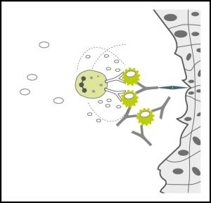 development-igg-food-allergy_4_with-tissue-damage